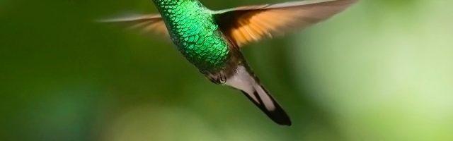 ハチドリが飛んでいる