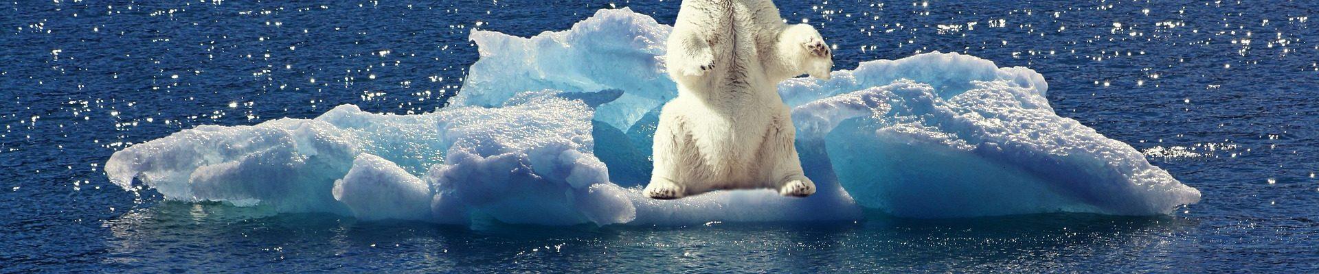 海氷に乗っているホッキョクグマ