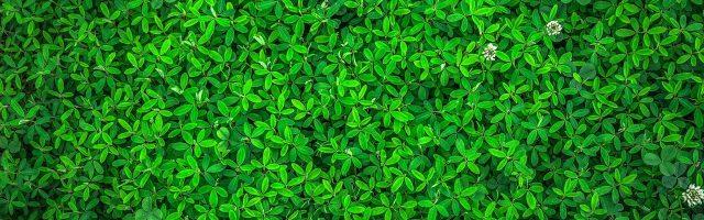 緑の草が集まる