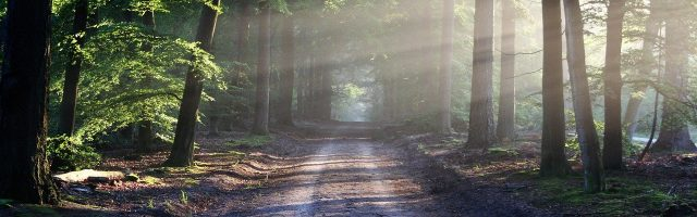 朝の光さす林