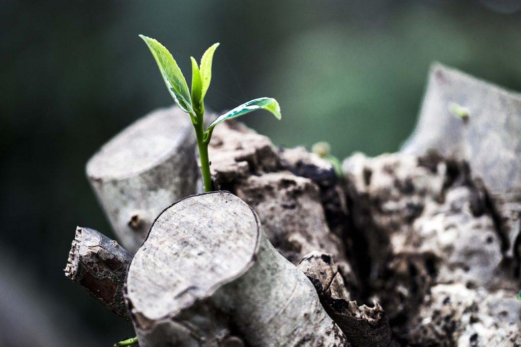 緑の芽が出ている