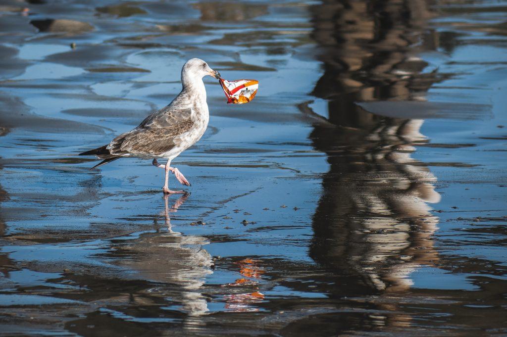 ごみをくわえている水鳥